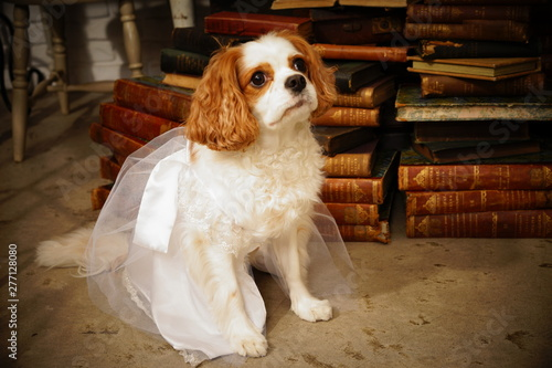 Fotografía ウェディングドレスを着たキャバリア