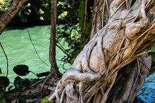Lovely Figural Tree Trunk With Vines By A River
