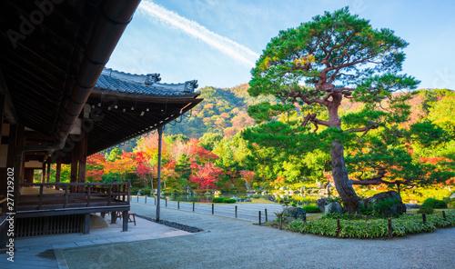 京都 天龍寺の紅葉   Wallpaper Mural