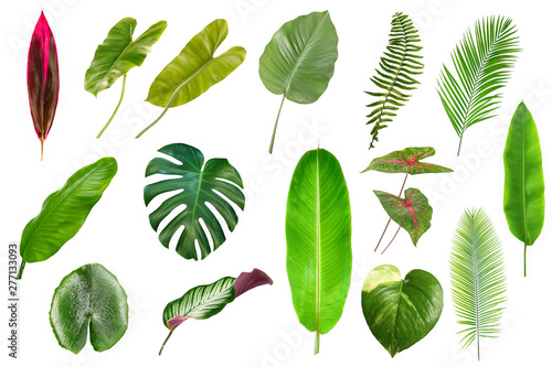 Fototapety, obrazy: Set of Tropical leaves isolated on white background. Tropical leaves