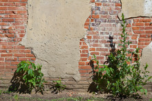 Old Deteriorating Building Wal...