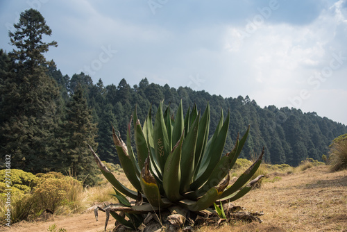 Photographie  La Marquesa National Park, with the official name Parque Nacional Insurgente Miguel Hidalgo y Costilla is a National park in the State of Mexico, in central Mexico