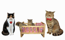 The Wooden Cradle With Kittens...