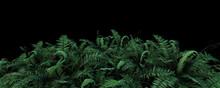 3d Illustration Bostonfern Foliage On Dark Background