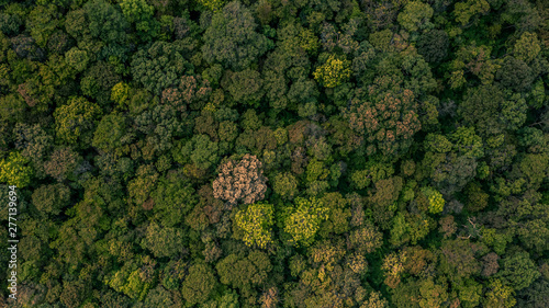 Background of forest, Aerial top view background forest, Texture of forest Wallpaper Mural