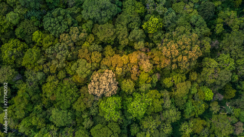 Valokuva  Background of forest, Aerial top view background forest, Texture of forest