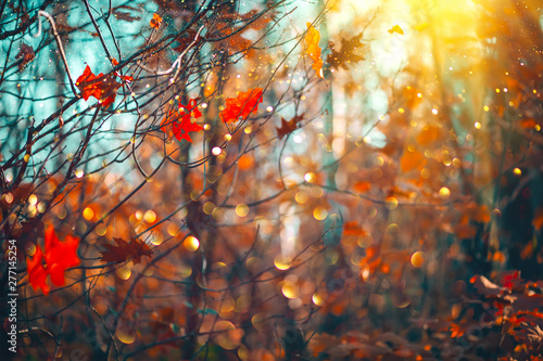 Cadres-photo bureau Arbre Autumn colorful bright leaves swinging on an oak tree in autumnal park. Fall background. Beautiful nature scene