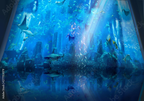 Photo  Under the water ocean sea life