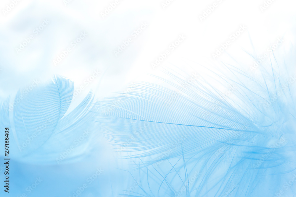 close up blue feather on white background.