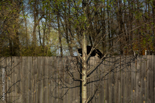 Photo  Cat on a high wooden fence is watching