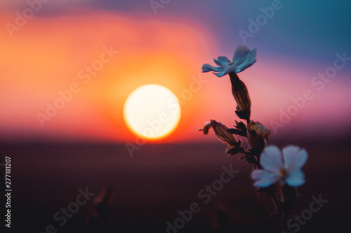 Blurry sunset with white flowers