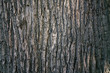 Leinwanddruck Bild - dry tree bark texture and background, nature concept