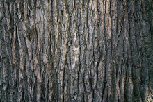Dry Tree Bark Texture And Back...