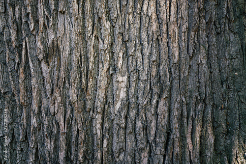 Photo dry tree bark texture and background, nature concept