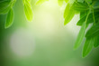 Closeup nature view of green leaf on blurred greenery background in garden with copy space for text using as summer background natural green plants landscape, ecology, fresh wallpaper concept.