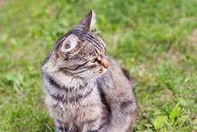 Beautiful Fluffy Grey Cat Sitt...