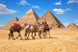 Bedouins on camels in front of the famous Giza Pyramids in Egypt