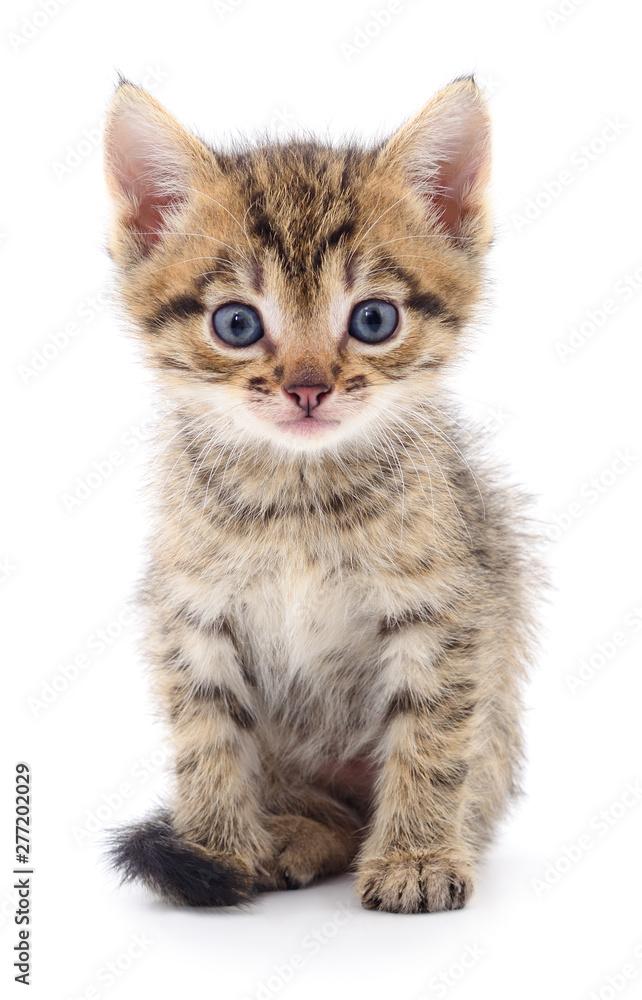 Fototapety, obrazy: Kitten on white background.