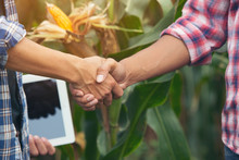 Farmer Shaking Hands Customers Corn Trading Agreement.