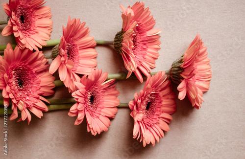 Orange gerbera flowers. Fototapet