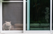 Cat Sitting On A Windows