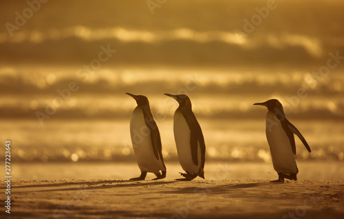 Fotobehang Pinguin King penguins standing on a sandy coast at sunrise