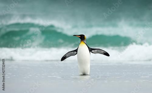 Fotografia King penguin standing on a sandy coast against big waves