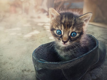 Funny Striped Kitten Looking Confused To Camera With His Blue Eyes As Sitting Outdoors In A Old Farm Shoe