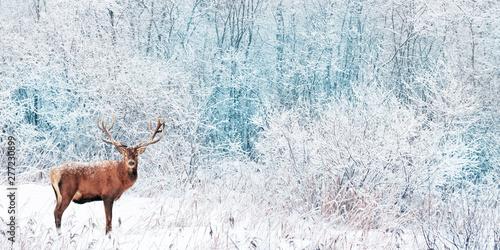 Poster Taupe Noble Deer in the winter forest. Winter wonderland. Christmas landscape. Wide format.