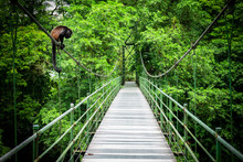 Howler At The Hanging Bridge At The Tropical Rainforest At Sarapiqui, Costa Rica. Bridge Crossing Sarapiqui River.