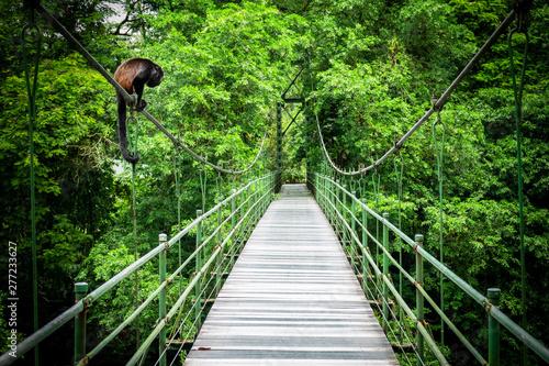 Photo Howler at the hanging bridge at the tropical rainforest at Sarapiqui, Costa Rica
