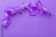 canvas print picture - the beautiful orchid flowers