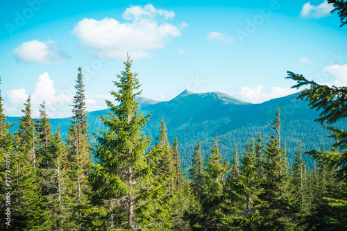 Fototapety, obrazy: beautiful mountain landscape, through the tops of the pines