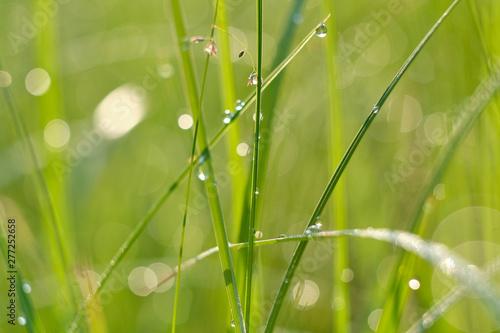 Fototapeta trawa   zielona-trawa-z-kroplami-rosy