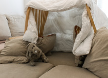 A Pillow Fort Made Of Blankets...