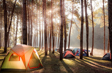 Camping And Tent Under The Pine Forest Near The Lake With Beautiful Sunlight In The Morning