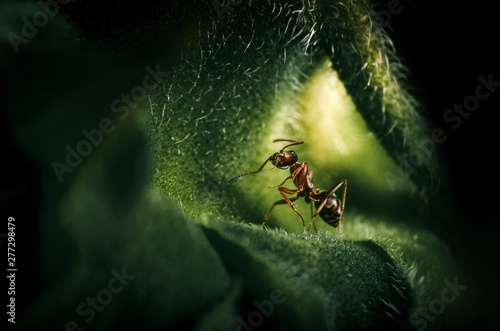 Photo Macroshot of an ant sitting on a sunflowerl leaf