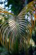 Palmblatt tropische Vegetation in einem Park, Seychellen, Afrika