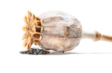 Dried Poppy Seed Pod And Seeds