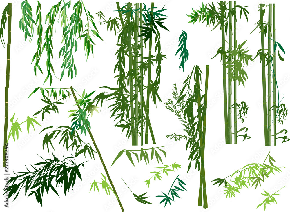 isolated set of green bamboo plants
