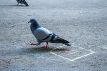 Pigeon On Sidewalk