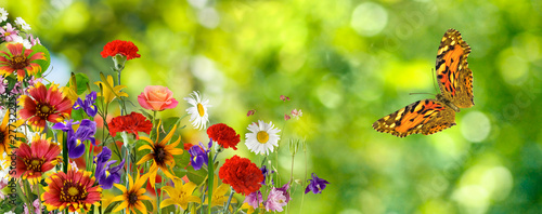 Poster Jaune beautiful flower and butterfly in the garden closeup