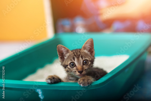 Cute little cat in the sand tray. Tableau sur Toile