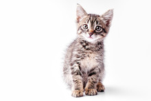 Portrait Of A Little Gray Striped Kitty On A White Background, Nice Little Kitten Looking With Big Eyes At The Camera, Copy Space