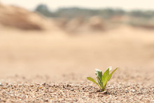 A Lone Green Plant Growing On ...