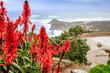 canvas print picture - Beautiful misty sea from a view point at Cape Point Nature Reserve, with Aloe ferox flowers,  Cape Point, Cape Town, South Africa
