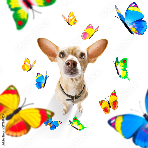 Tuinposter Crazy dog butterflies and a dog in love