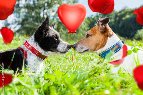 Tuinposter Crazy dog couple of dogs in love for valentines