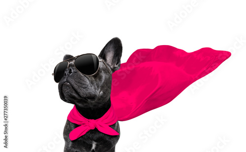 Ingelijste posters Franse bulldog super hero dog