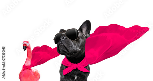 Cadres-photo bureau Chien de Crazy super hero dog